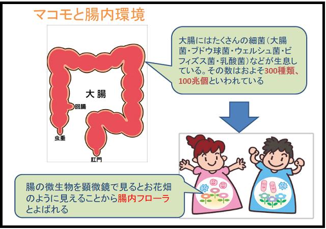 マコモと腸内環境_640