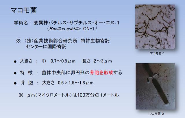 マコモ菌とは_640